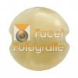 reichenbach-0701-mystic-beige